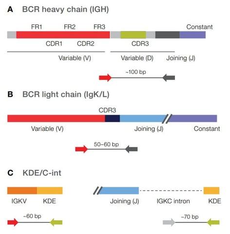 Oncomine-BCR-Pan-Clonality-Assay-Slide1