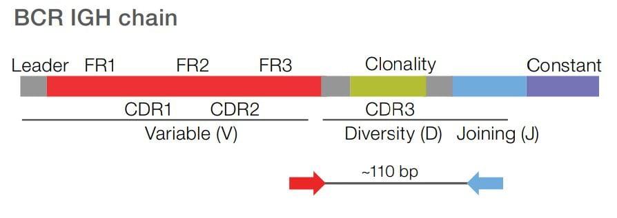 Oncomine-BCR-SR-Assay-Slide2